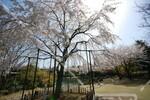 行船公園(平成庭園・源心庵)