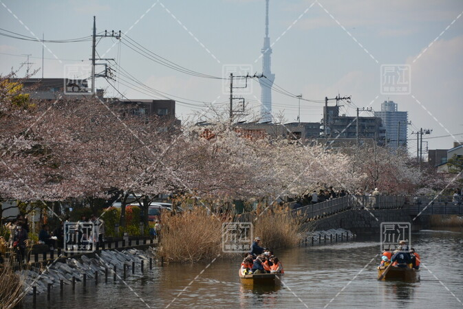 第5回新川千本桜まつり