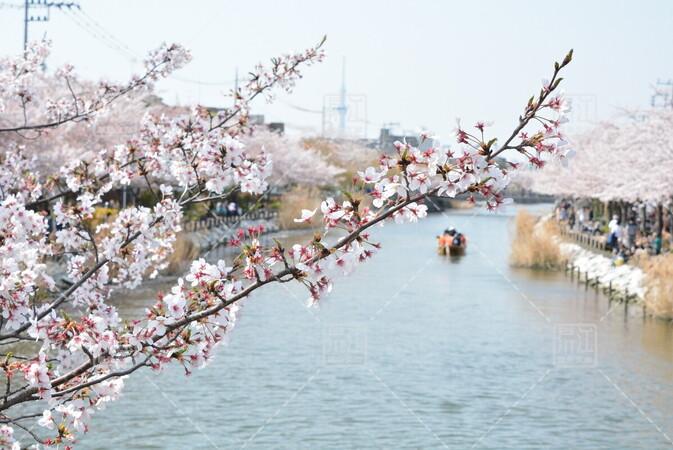 第4回新川千本桜まつり