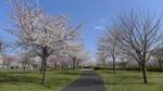大島小松川公園