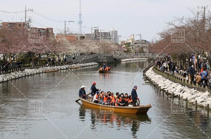 第3回新川千本桜まつり