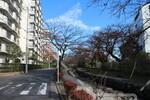 篠田堀親水緑道