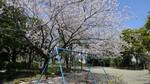 平井さくら公園