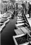 金魚の競り市