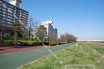 大島小松川公園付近
